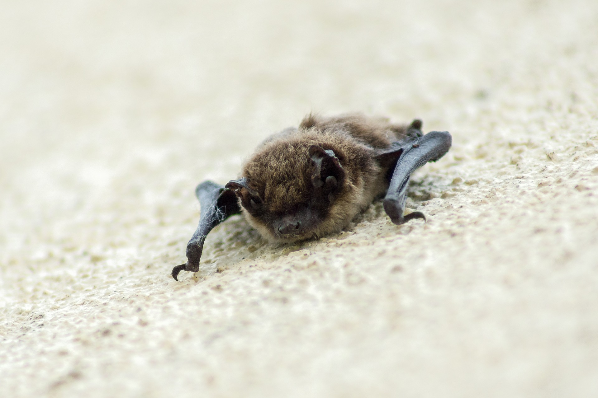 Problems bat cause in your house