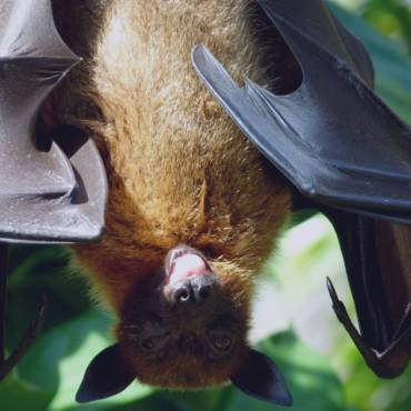 Why Are Bats Important For Our Ecosystem?