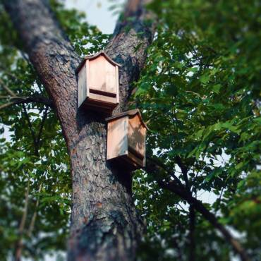 Bat Houses Can Be a Huge Asset in Your Yard