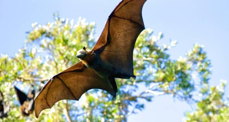 How Bats Use Echolocation