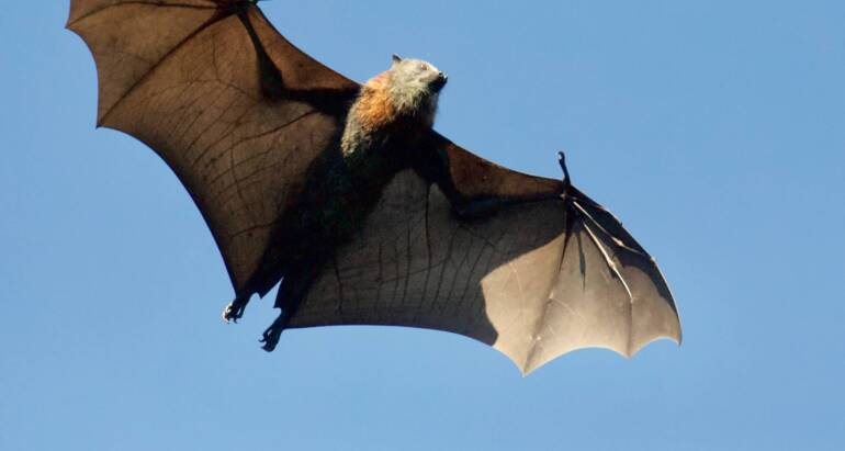 Where Exactly Do Bats Hide In Your Home? Bats In The House