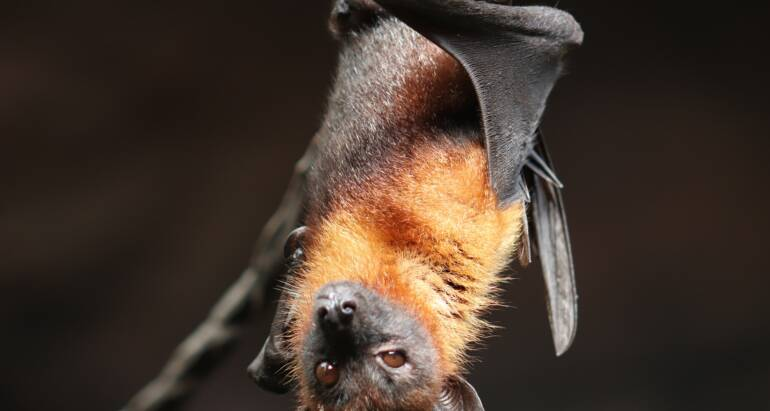 Bat Exclusion | How To Get Bats Out Of Your Home