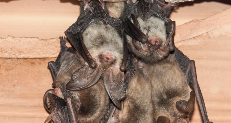 Where Do Bats Hibernate During Cold Winter Months?