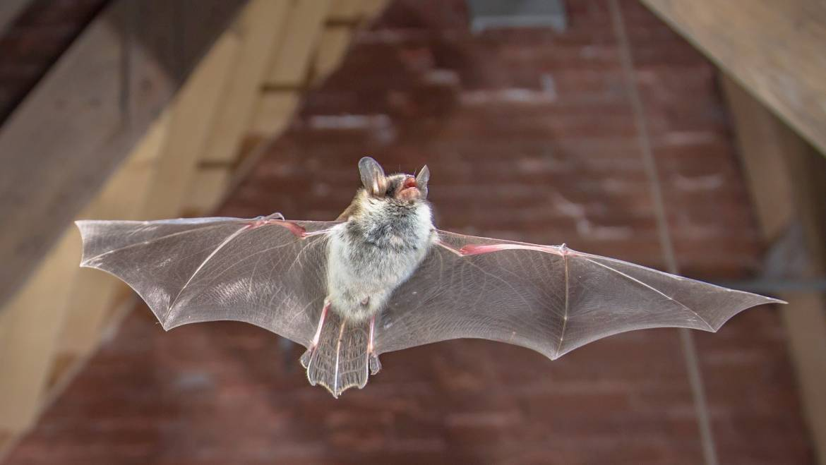 Do You Think You Have Bats In Your House?